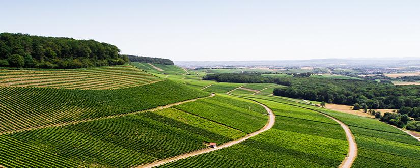 Weingut Graf Neipperg • Wein kaufen