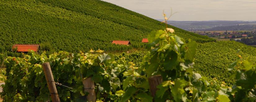 Weingut Eberbach-Schäfer • Wein kaufen